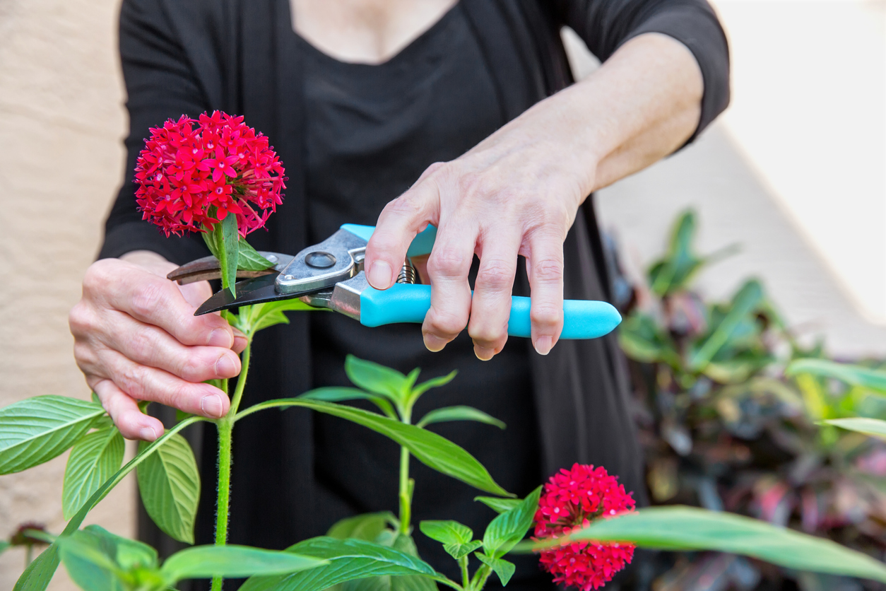 woman with arthritis cutting flowers